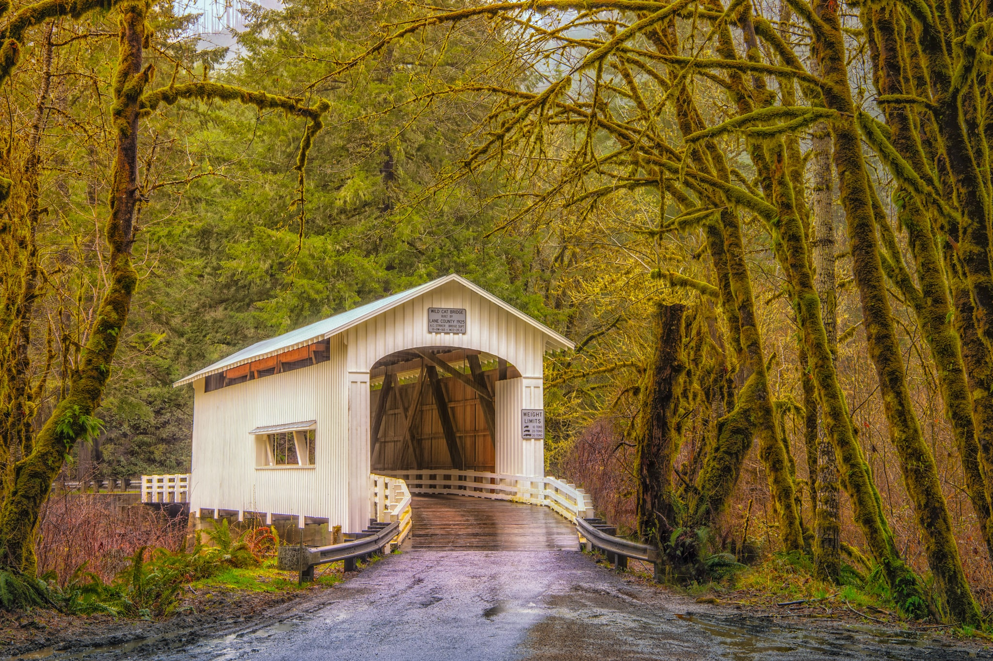 Wild Cat Bridge - Oregon's Pacific coast