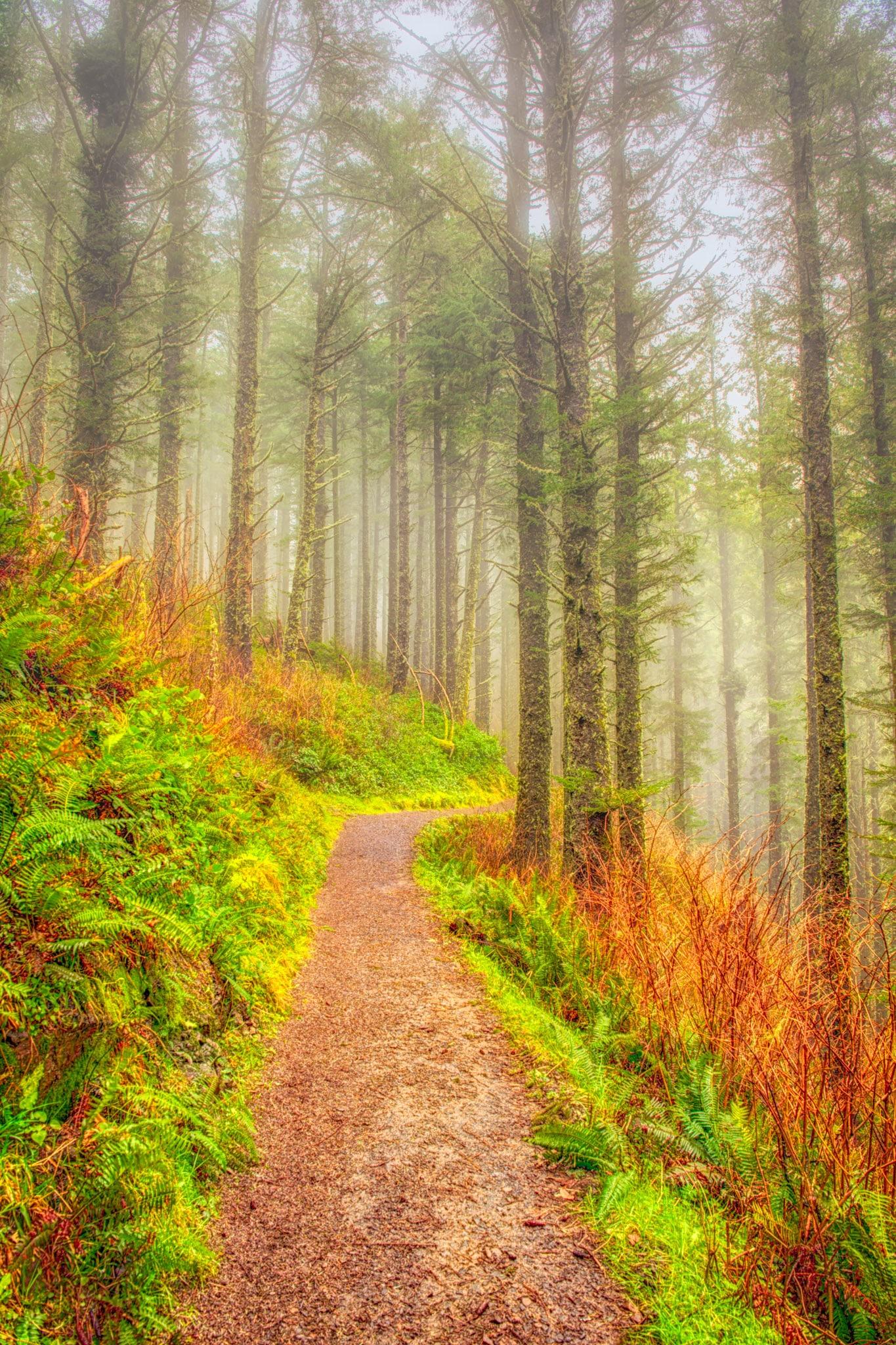 Cape Lookout Trail - Oregon's Pacific coast
