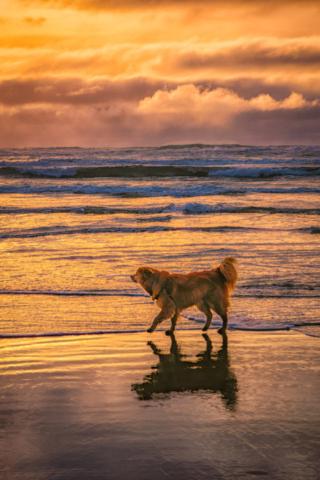 Dog Enjoying Cannon Beach - Oregon's Pacific coast