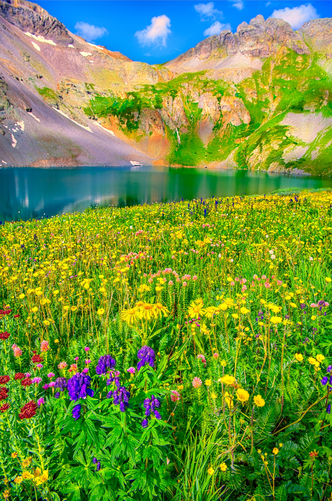 Monkshood, Leafy Arnica, Alpine Avens, Queens Crown, Kings Crown, and Alpine Larkspur carpet the shore of Clear Lake, a hanging lake below Peak 13309 at the end of FS 815, located in the mountains between Ouray and Silverton, Colorado.