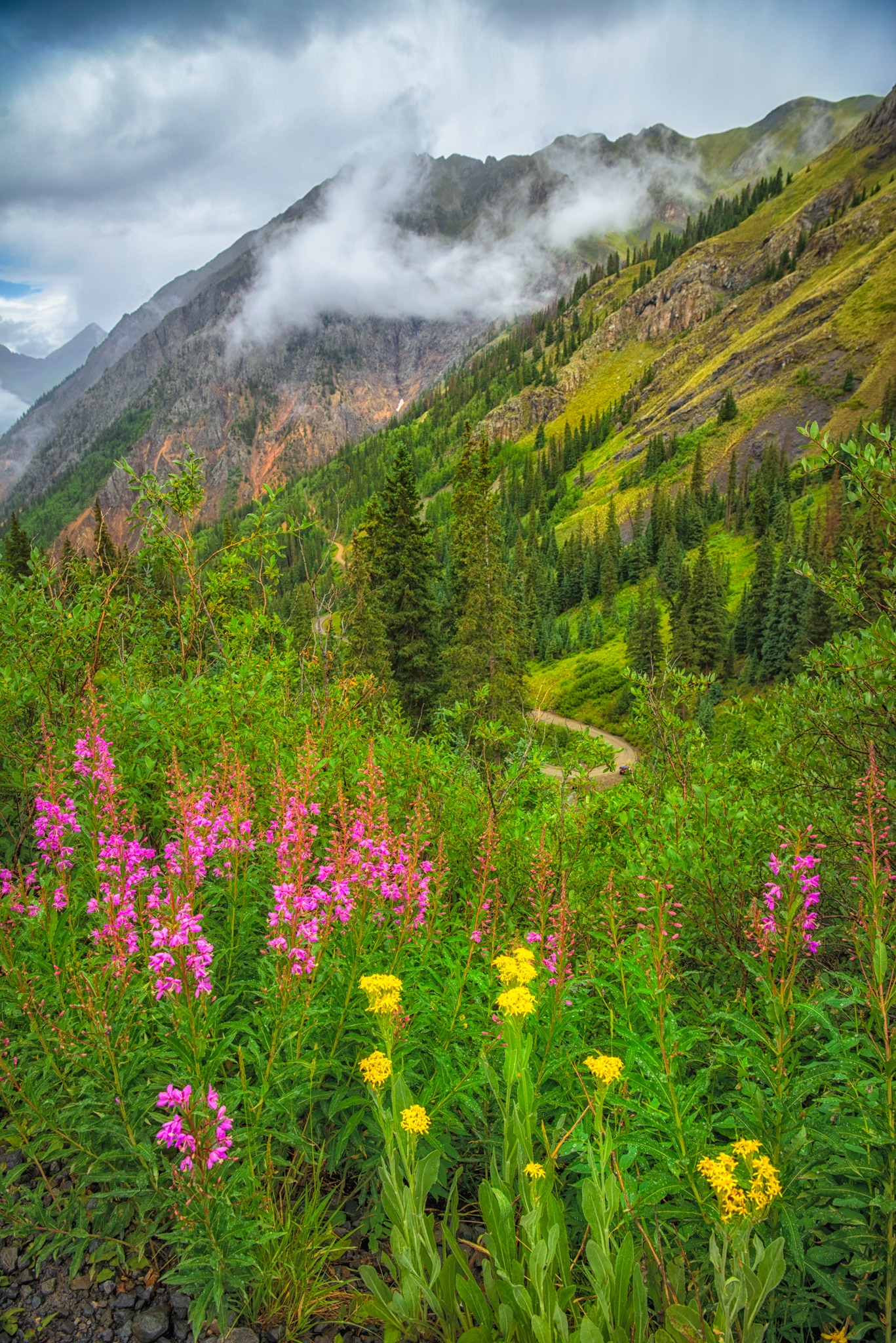 The fireweed and groundsel along Stony Pass Road near Silverton, Colorado, is especially brilliant in color on this cold and rainy day.