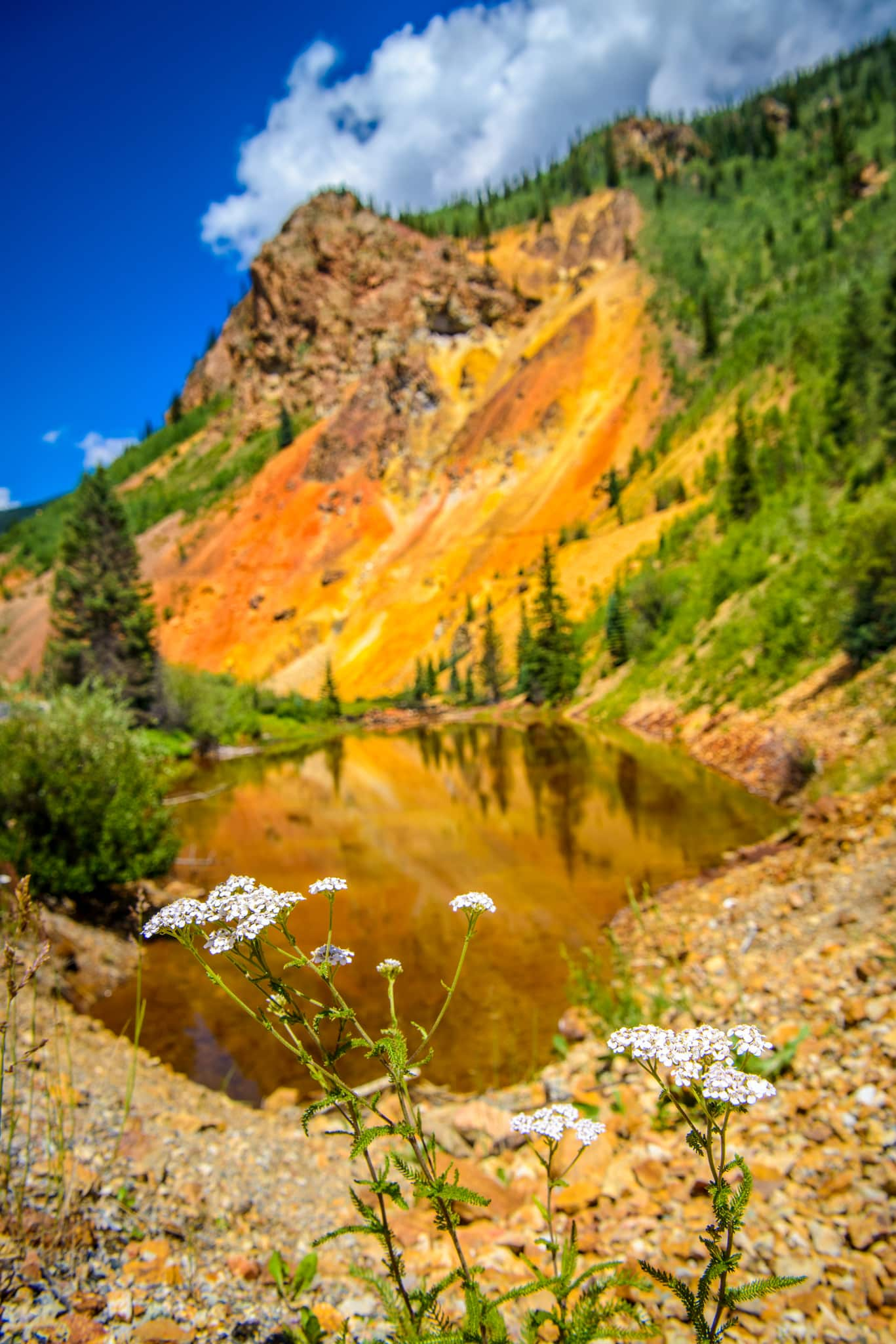 A lone Yarrow plant softens the view of a mineralized hillside and run-off pond just north of Silverton, Colorado, on US 550.