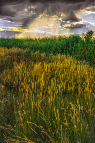 Crepuscular rays illuminate marsh grasses located in the Blanca Wildlife Habitat Area in the San Luis Valley near Alamosa, Colorado.