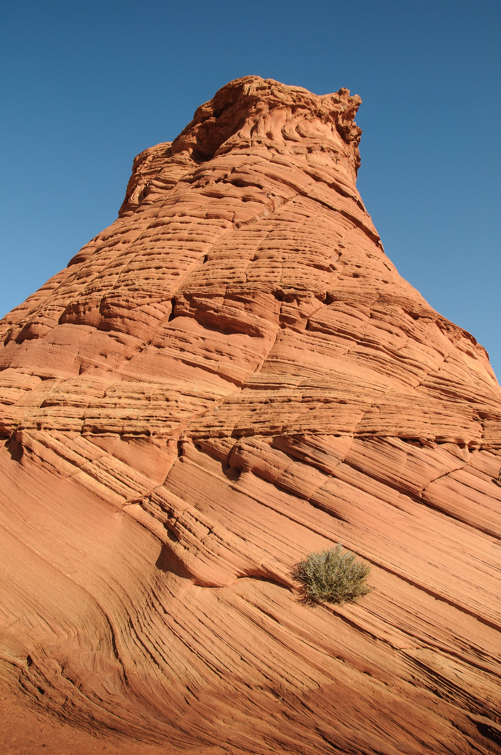 Bush growing on the side of a sandstone teepee in the Paw Hole area of South Coyote Buttes in the Vermillion Cliffs National Monument.