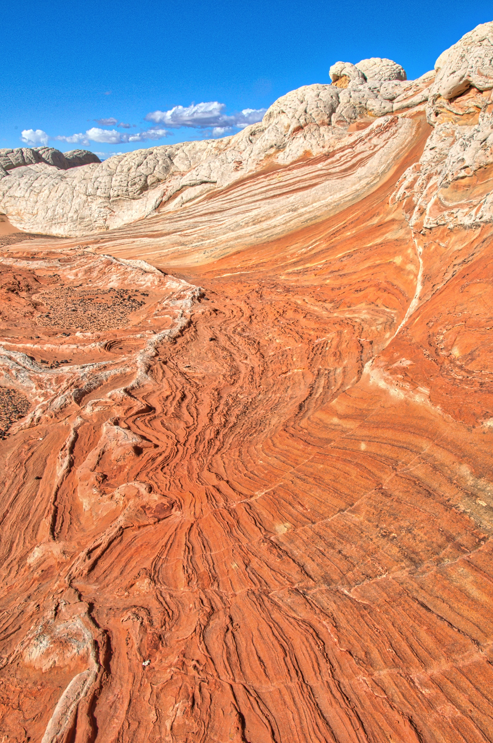 The red layered rocks look like surf rolling in while the whote brain rock look like white caps in Vermillion Cliffs National Monument.