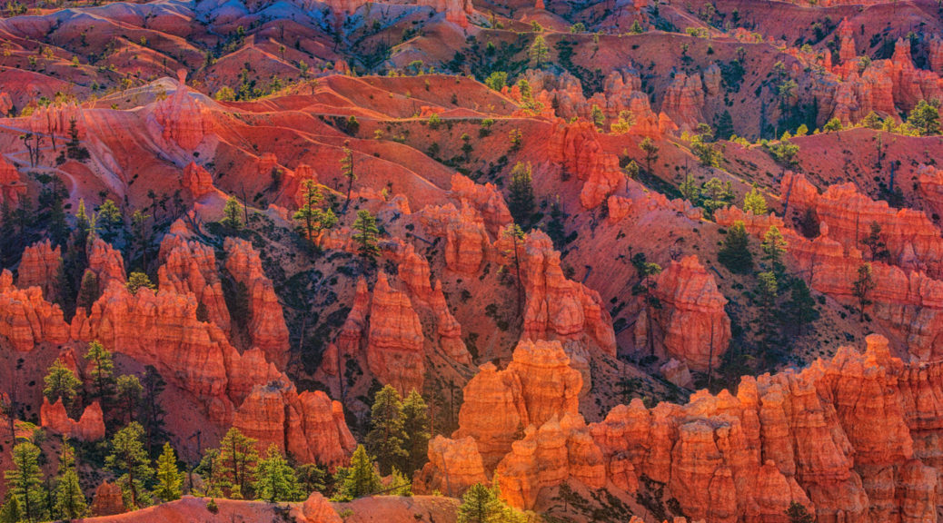 Sunrise view from Fairlyland Point in Bryce Canyon National Park, Utah. This photo is part of the Garden Variety Photo Exhibition