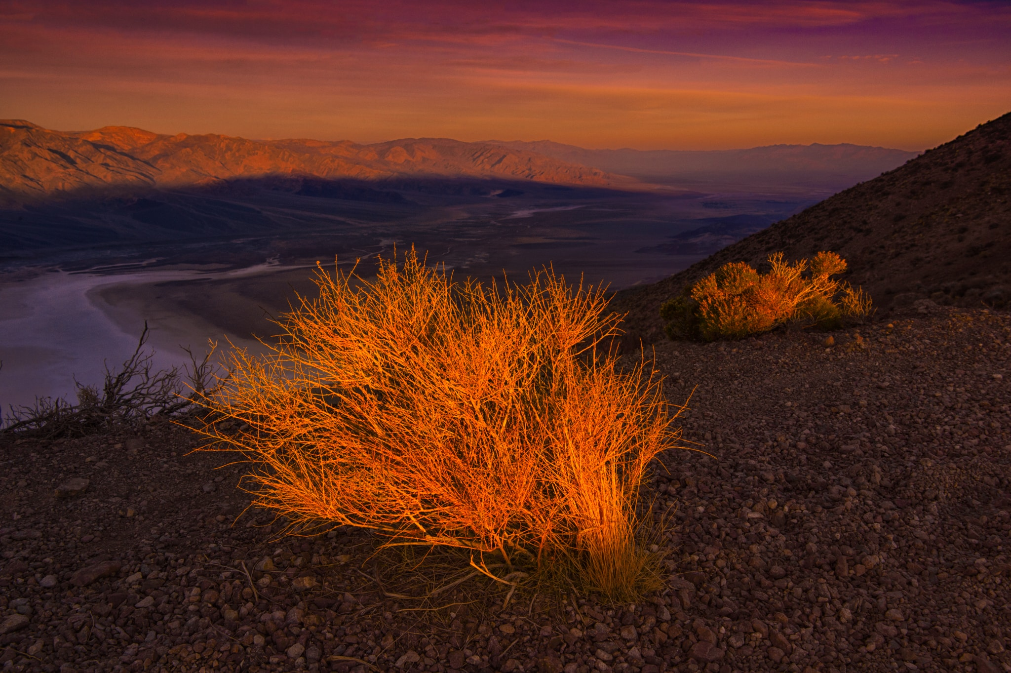 The rising sun illuminates desert brush at Dante's View, in the Black Mountains, 13 miles southwest of Highway 190 in Death Valley National Park, California.