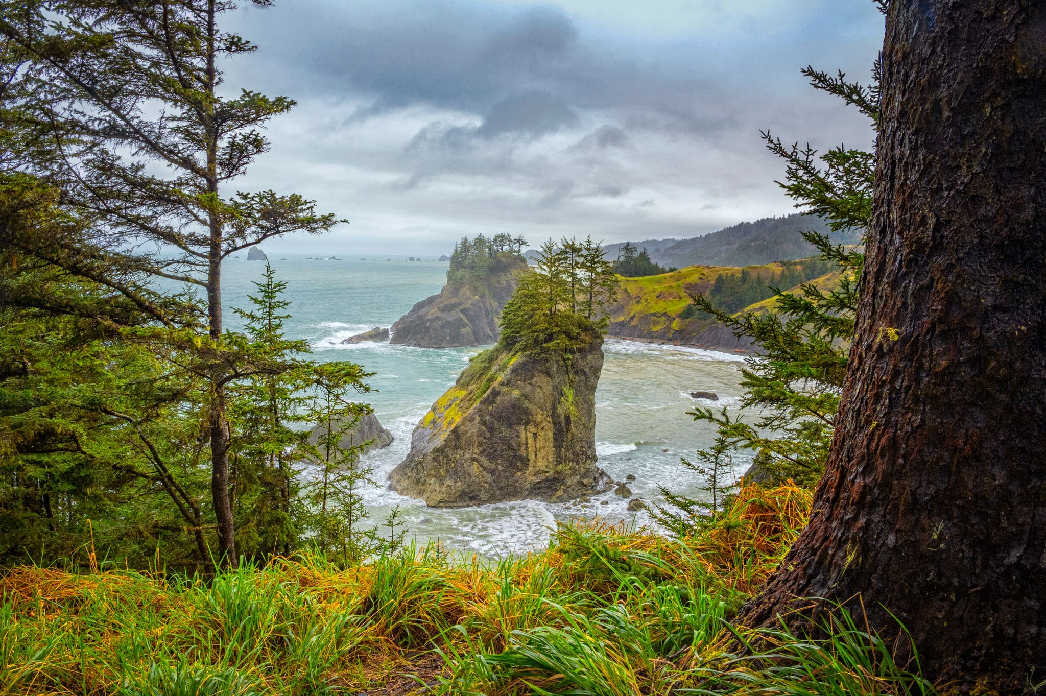 Various pine trees grow atop a large rock, which is visible along one of the trails in Cape Sebastian State Scenic Corridor in Oregon - Oregon's Pacific coast