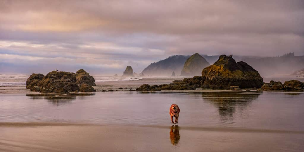 Dog Enjoying Cannon Beach - Oregon's Pacific coast