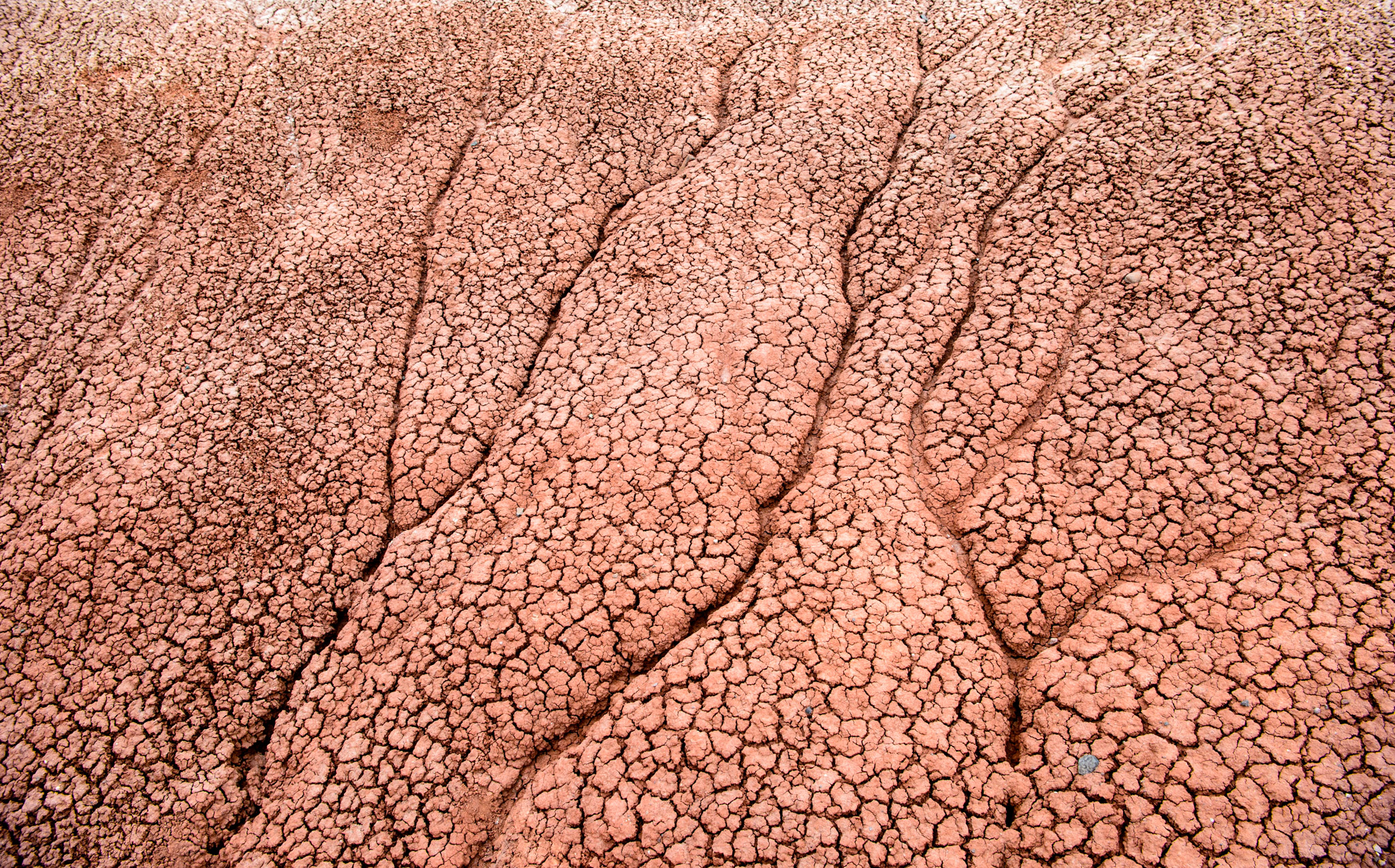 Mudcracks in the Painted Hills