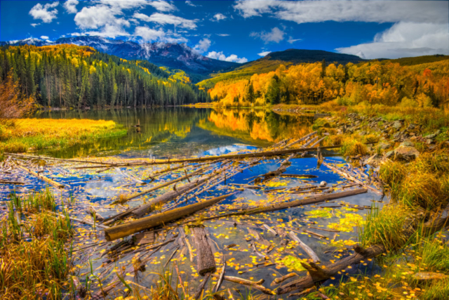 Aspen leaves float on the surface of Woods Lake, at the end of Fall Creek Road, near Telluride, Colorado.