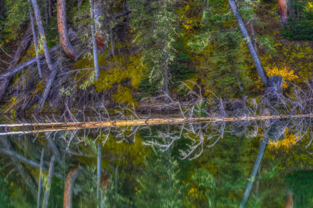 Deep woods and a fallen tree are reflected in the almost still waters of Woods Lake, at the end of Fall Creek Road, near Telluride, Colorado.