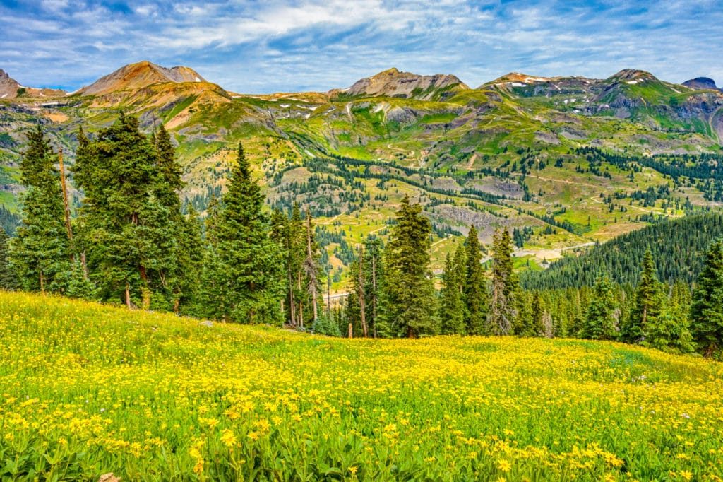 Highway 550 can be seen across a sea of Leafy Arnica along FS 825 north of Silverton, Colorado.