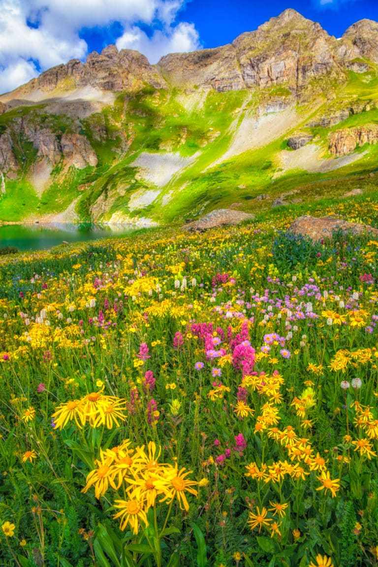 Alpine Avens, Alpine Mertensia, Alpine Paintbrush, Bistort, ndian Paintbrush, Leafy Arnica, Leafy Bract Aster, Elephant Head, and Alpine Moretensia grow around the shores of Clear Lake, a hanging lake below Peak 13309 at the end of FS 815, located in the mountains between Ouray and Silverton, Colorado.