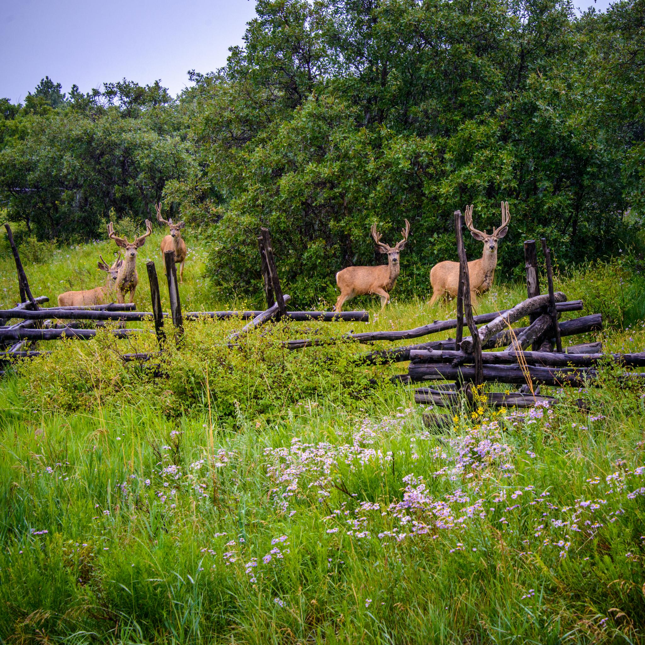 Photos Of San Juan Mountain Fauna William Horton Photography