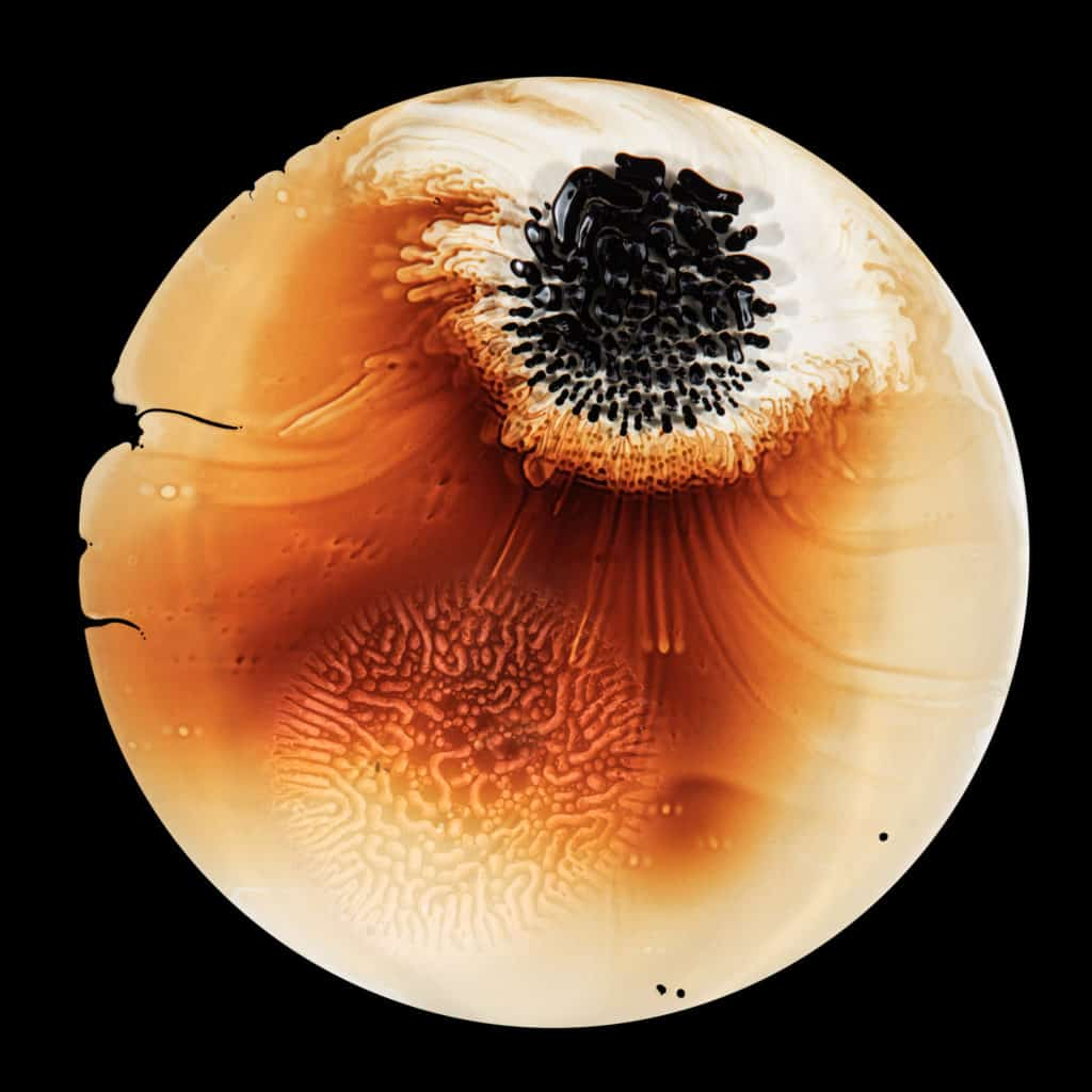 Ferro-magnetic fluid is pulled through glycerine with a neodymium magnet in a petrie dish.  - Ferrofluid abstract photographs