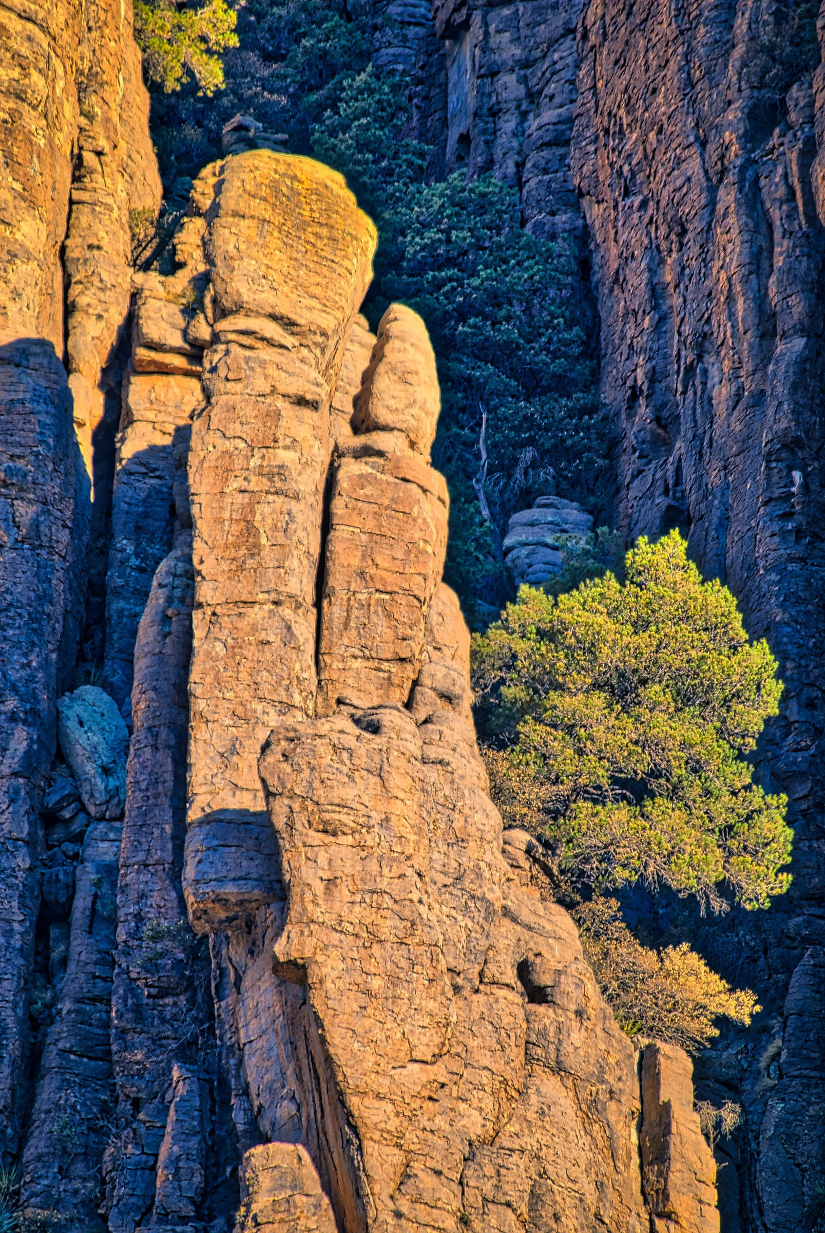 Rock structure of the Organ Pipe Formation in Chiricahua National Monument. The columns are formed of Rhyolite Canyon Tuff.