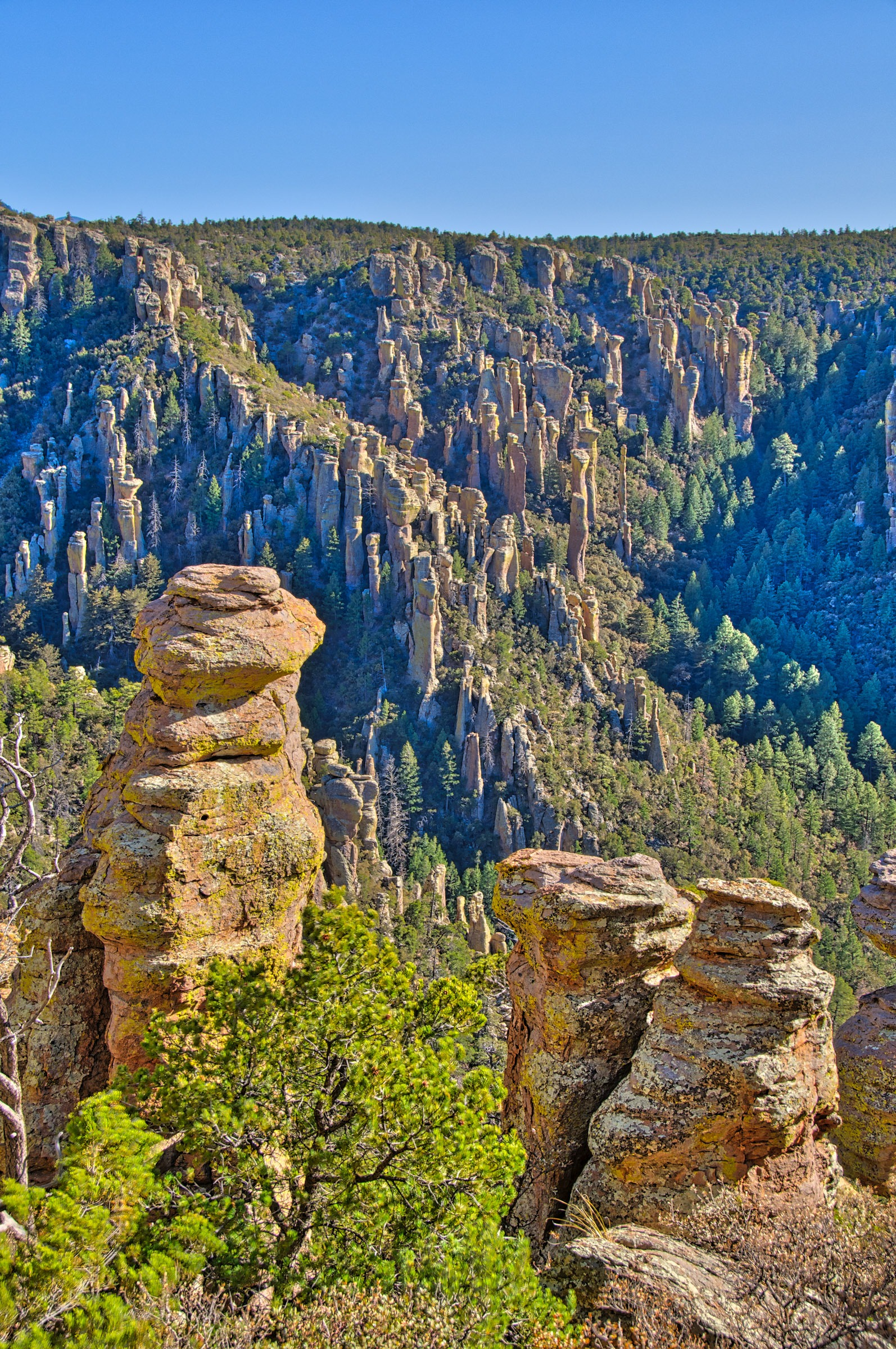 Canyon lined with rock columns north of Massai Point  in Chiricahua National Monument. The columns are formed of Rhyolite Canyon Tuff.