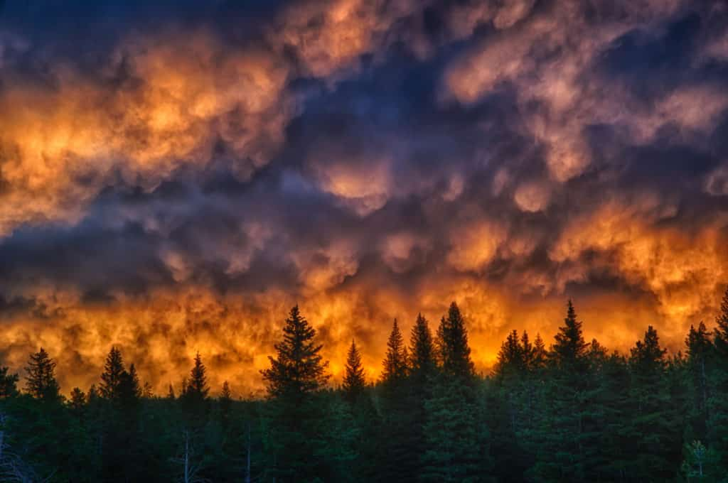 Dawn turns the Mammatus clouds brilliant orange above a pine forest in Flathead National Forest near East Glacier, Montana. Montana Summer Landscapes