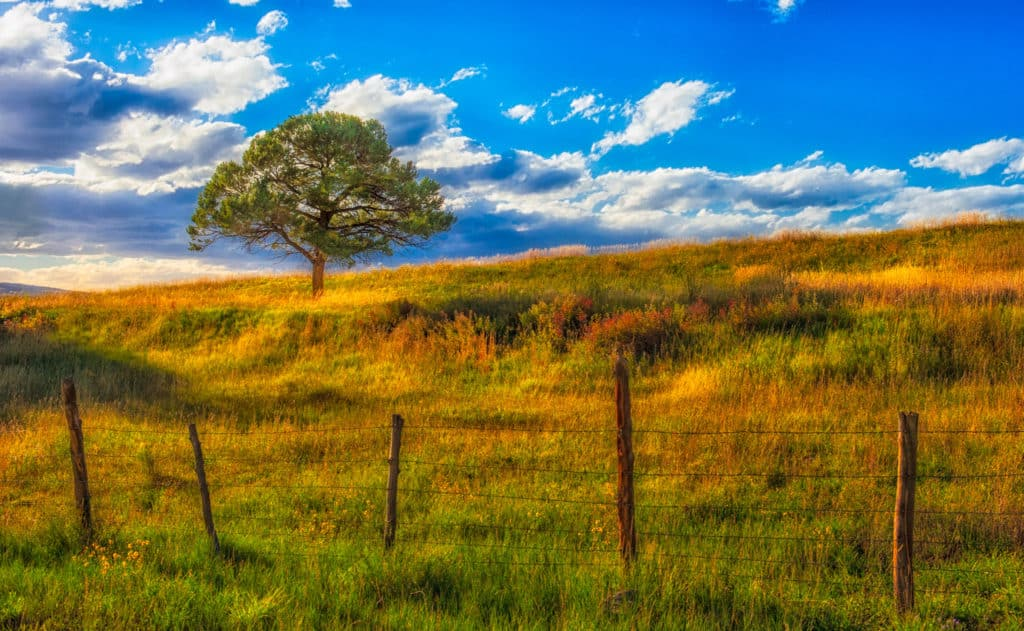 A Lone tree stands in a field of autumn-colored grasses, fenced in by a barb-wire fence.