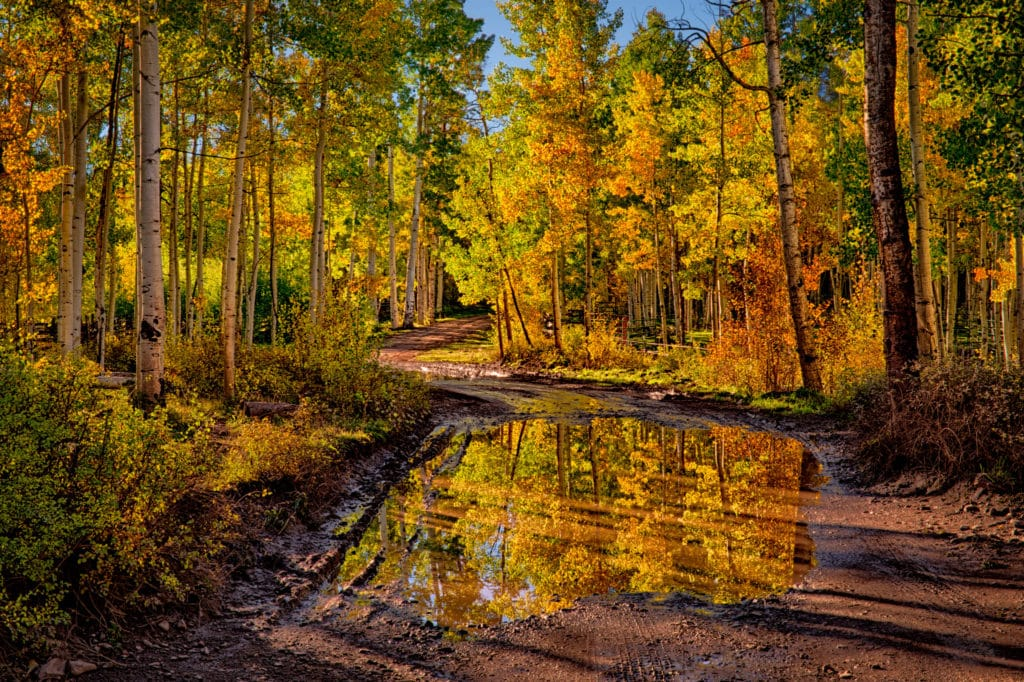 Autumn aspens are reflected in a large puddle on CR 5 near Ridgway, Colorado.