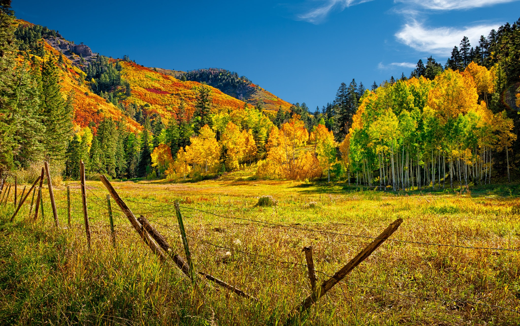A mountain pasture is surrounded by autumn-colored Gambel oaks and aspens as seen from Ouray CR 14a near Ouray, Colorado, off US 550.