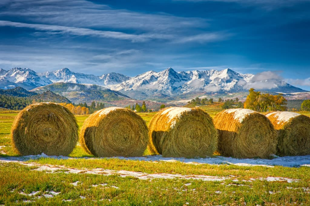 Newly-cut hay in round bales sits in a mountain pasture close to Ridgway, Colorado, along Highway 62, with the snowy Sneffels Wilderness in the background.