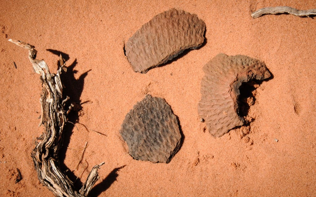 These Anasazi pottery fragments were in the sand next to one of the Paw Hole teepees. They represent the corrugation technique used in early pottery making.