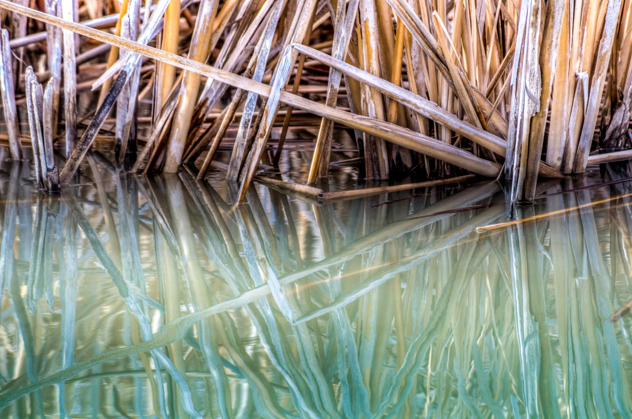 A closeup of the shoreline of one of the ponds in Bosque del Apache Wildlife Refuge showing shore grasses reflected in the water.