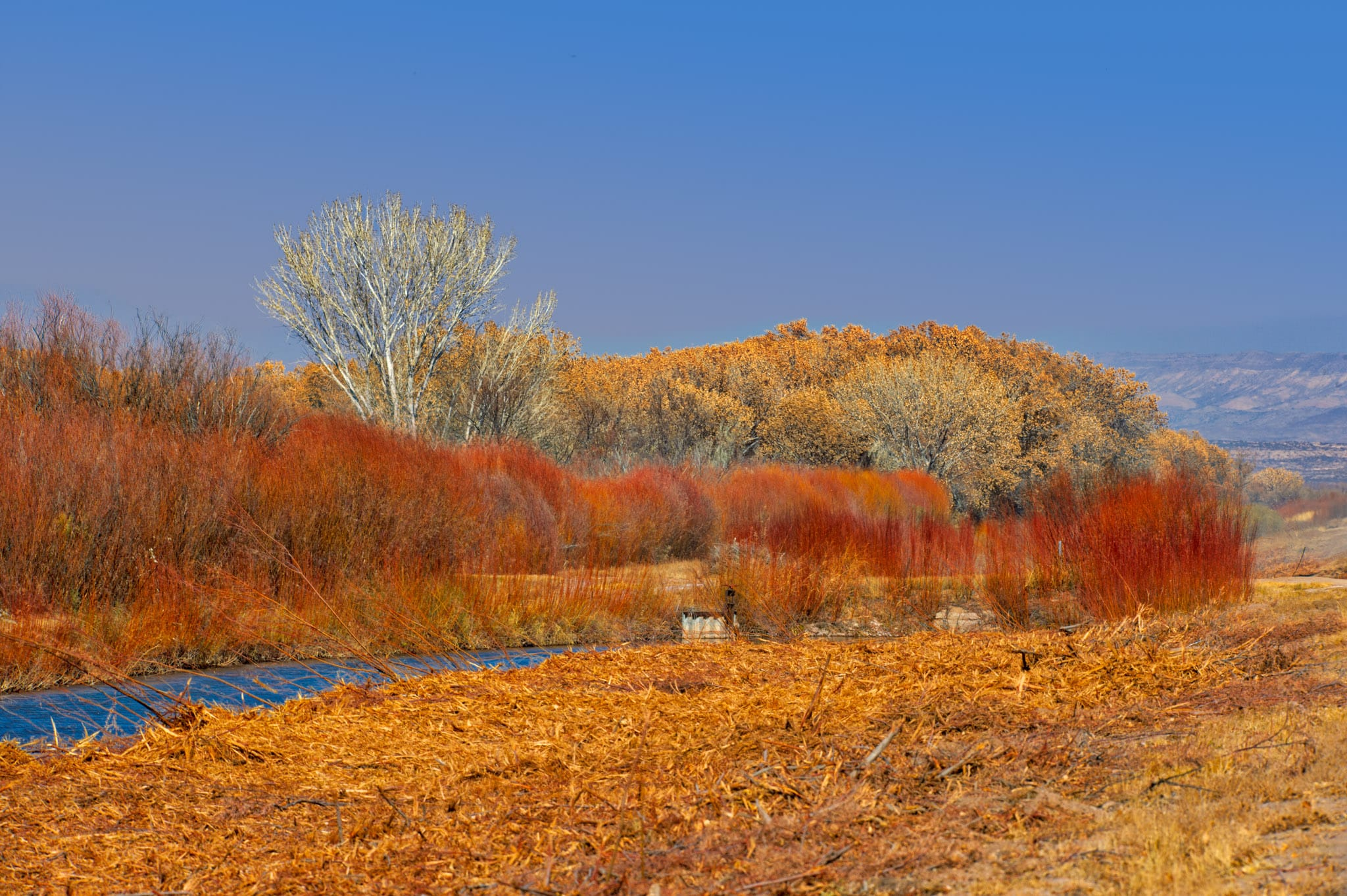 Goodings and coyote willows glow red and orange along the waterways in Bosque del Apache National Wildlife Refuge near Socorro, New Mexico.