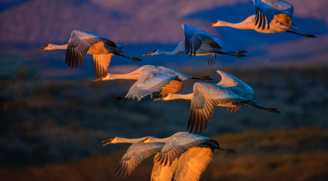 New Bosque del Apache Photographs