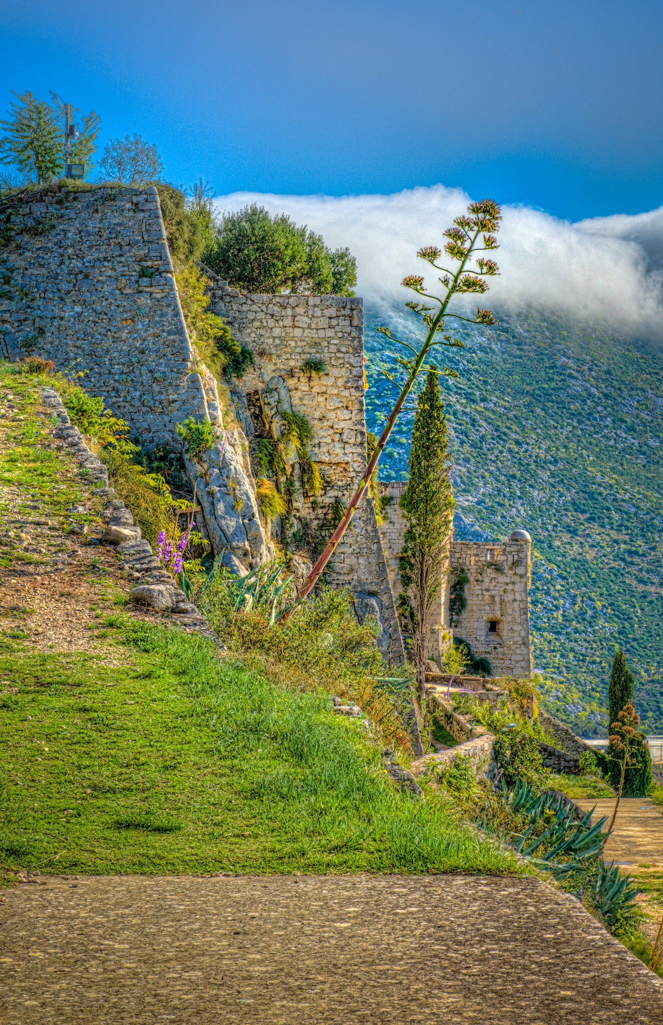 A detail of the fortification walls of Klis Fortress, above Split, with an agave leaning away from the walls.