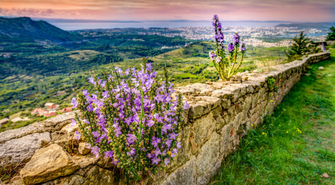 Campanula grow out of the walls at Klis Fortress overlooking the Croatian city of Split. From Dalmatian Coast Photographs portfolio.