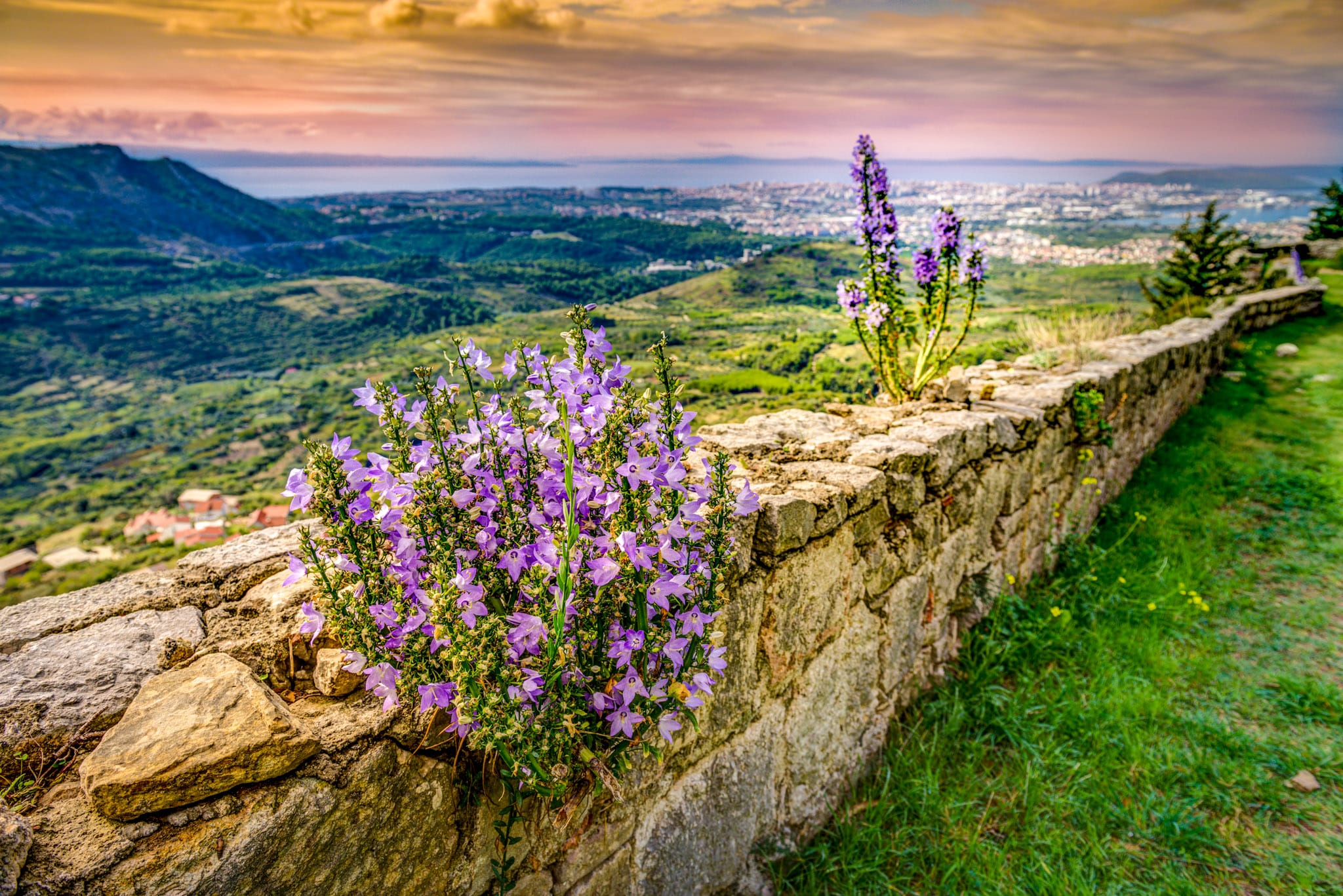 Campanula grow out of the walls at Klis Fortress overlooking the Croatian city of Split.