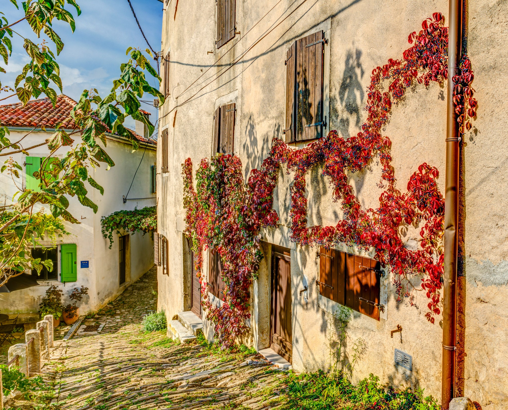 Looking down a cobbled street in the Medieval Istrian village of Motovun, Croatia. Red Virginia Creeper grows on the wall of a building.