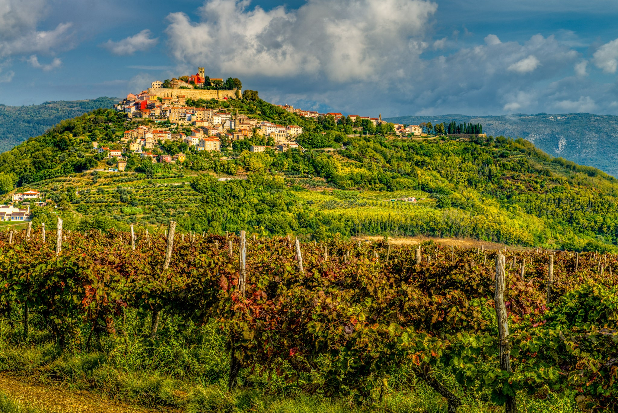 Looking westward toward the hilltop Medieval Istrian village of Motovun, Croatia, with vineyards in the foreground.