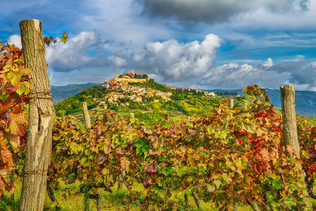 Looking westward toward the hilltop Medieval Istrian village of Motovun, Croatia, with grape vines in the foreground.