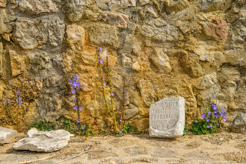 Remnants of monastery walls with campanula at the Church of St. Lucy on the island of Krk, Croatia