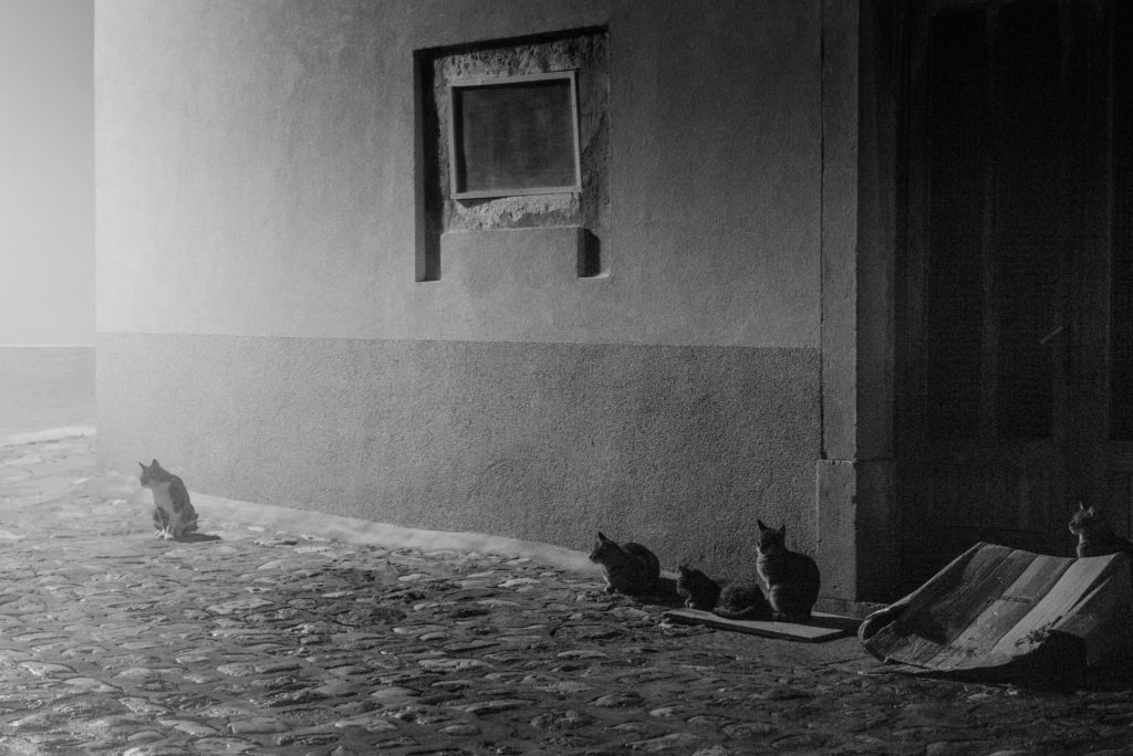 Several cats sit along a cobbled street on a foggy night in the the old town of Krk on the island of Krk in Croatia.
