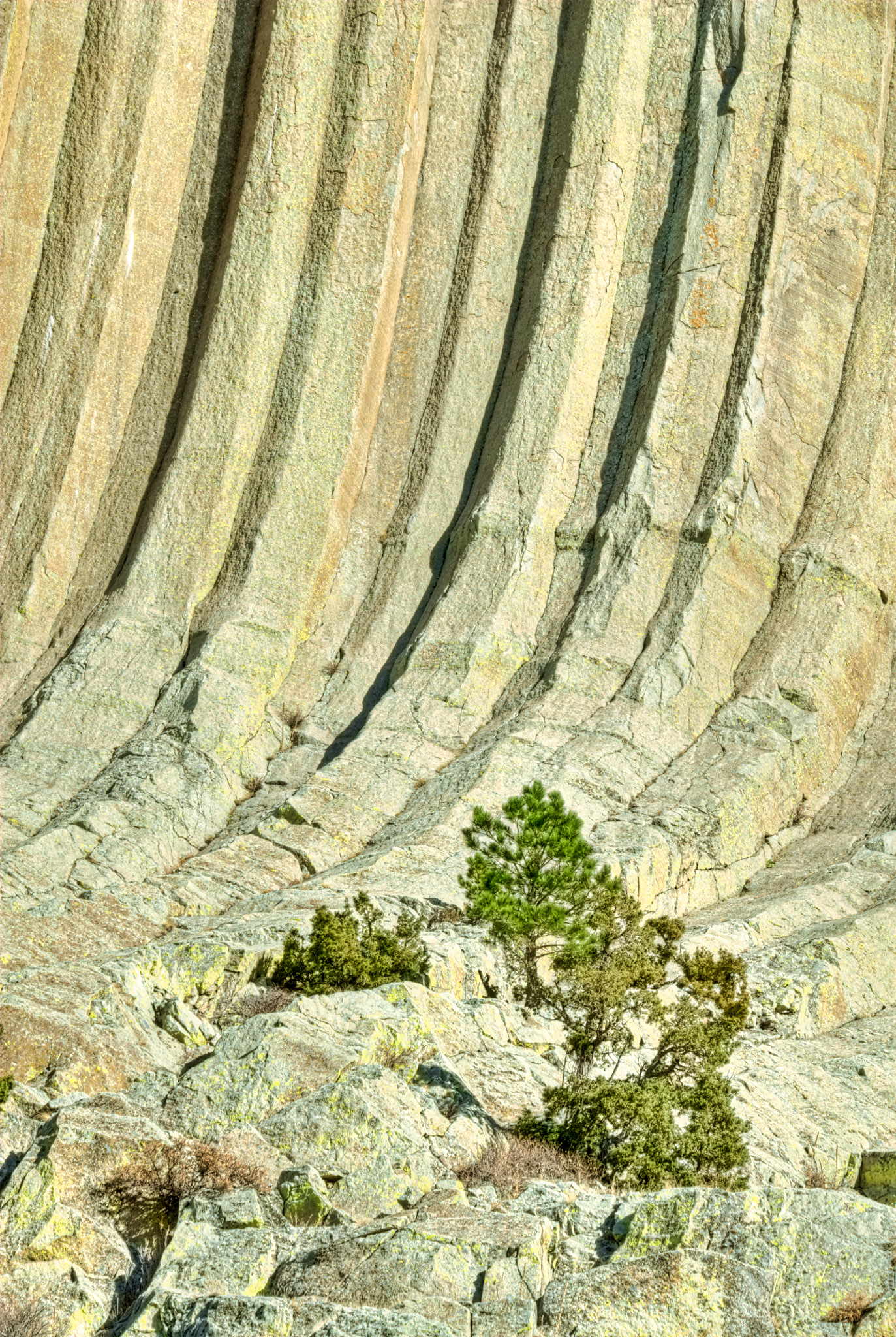 A close-up view of the base of Devils Tower, showing the columnar jointing.