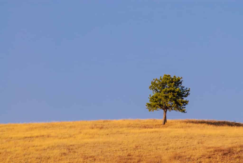 A lone tree sits on a golden grass field with blue sky.