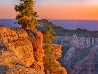 Looking south from the Transept Trail on the North Rim of the Grand Canyon. - Grand Canyon North Rim