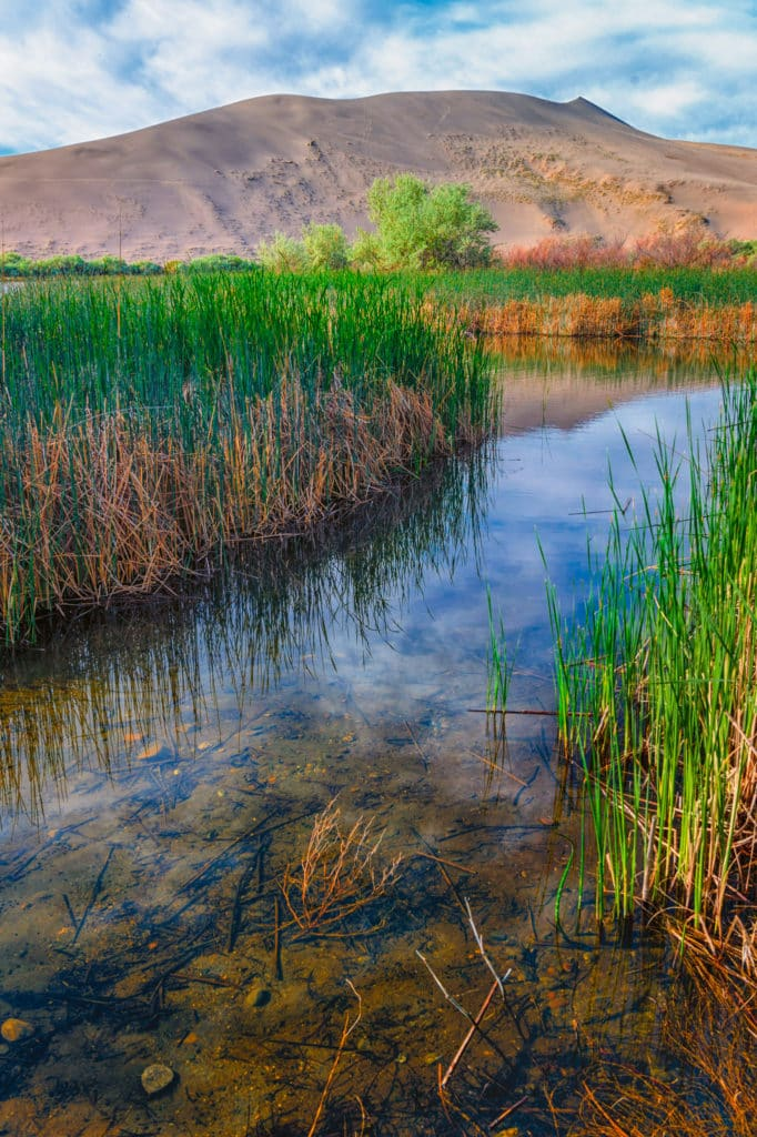 In a marshy area between Big Lake and Small Lake in Bruneau Dunes State Park, near Boise, Idaho.