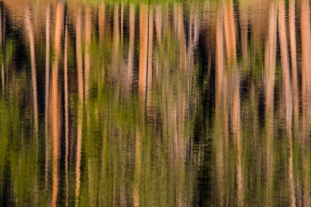 Tree trunks reflected in the ripples of Sprague Lake in Rocky Mountain Park.