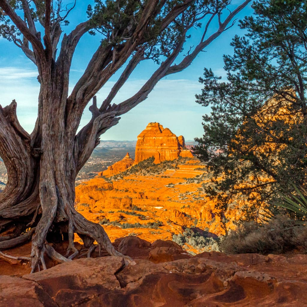 An ancient juniper on the Carousel along Schnebly Hill Road in Sedona, Arizona.