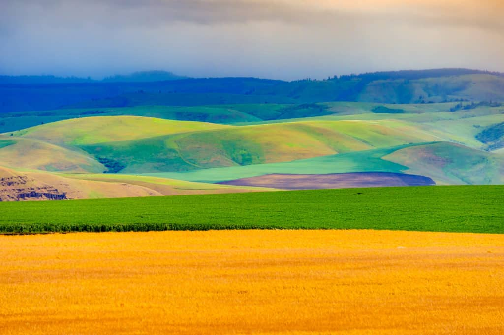 This view of the rolling Palouse hills was taken from the access road to Steptoe Butte in Steptoe Butte State Park near Colfax, Washington. From the Palouse Region portfolio.