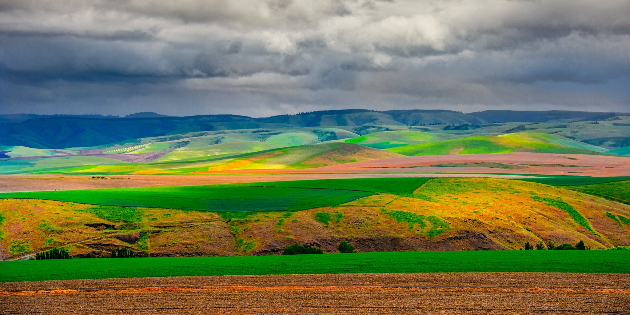 This view of the rolling Palouse hills was taken from the access road to Steptoe Butte in Steptoe Butte State Park near Colfax, Washington.