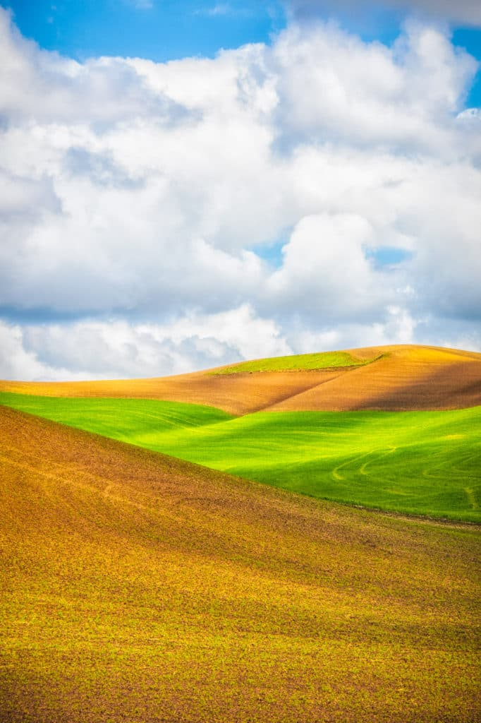 Green fields of new wheat contrast with the orange, newly harvested fields in the Palouse region of eastern Washington, near Colfax.
