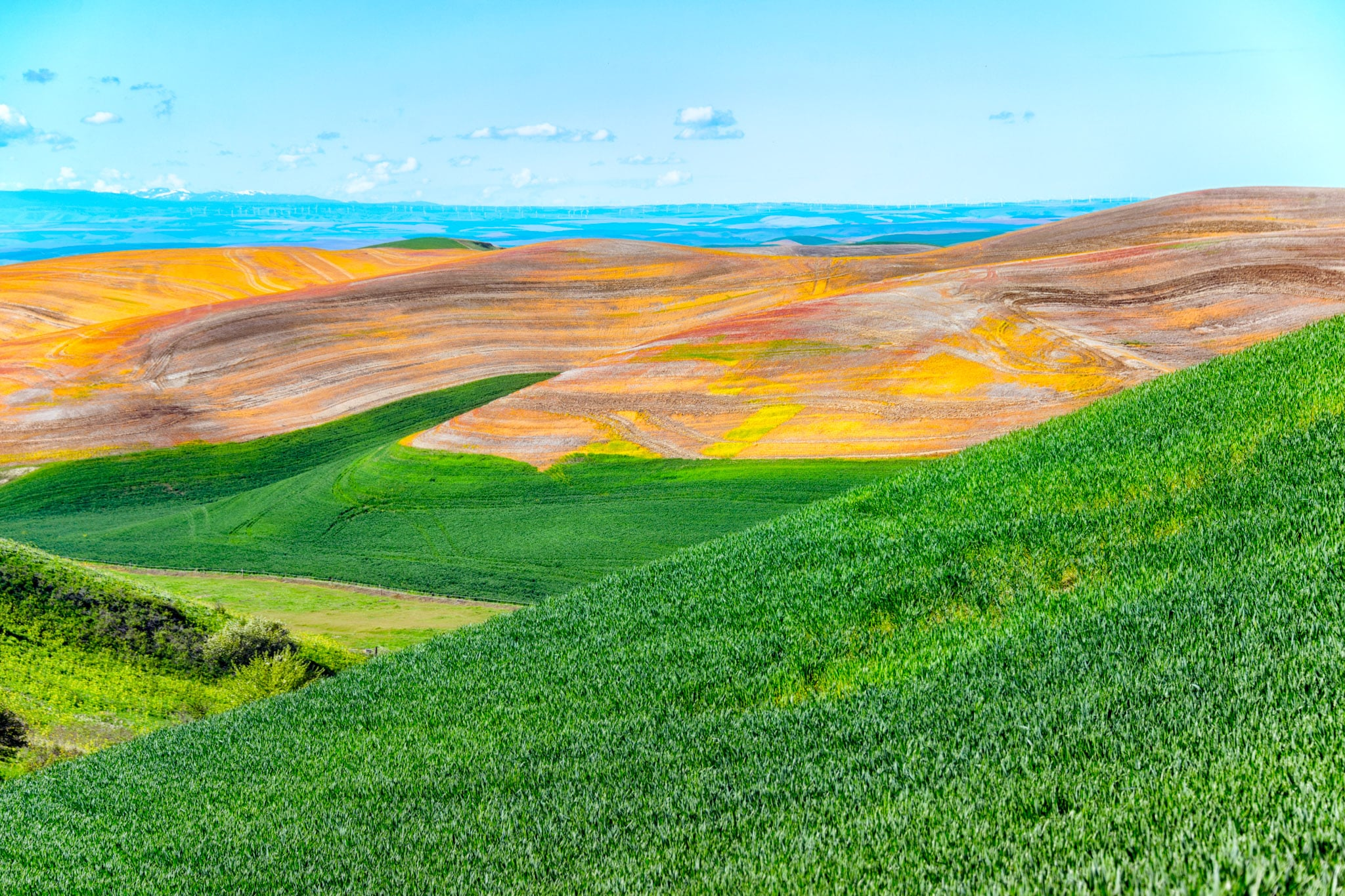 Green fields of new wheat contrast with the orange, newly harvested fields in the Palouse region of eastern Washington, near Colfax. In the hazy distance you can almost make out wind turbines.