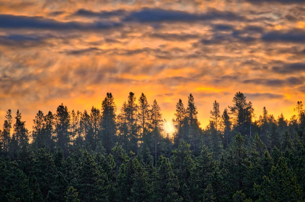Dawn in in Yellowstone National Park along the Firehole River.